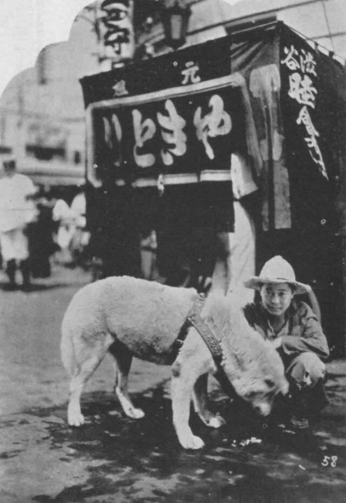 Хатико — история об одной преданной собаке.