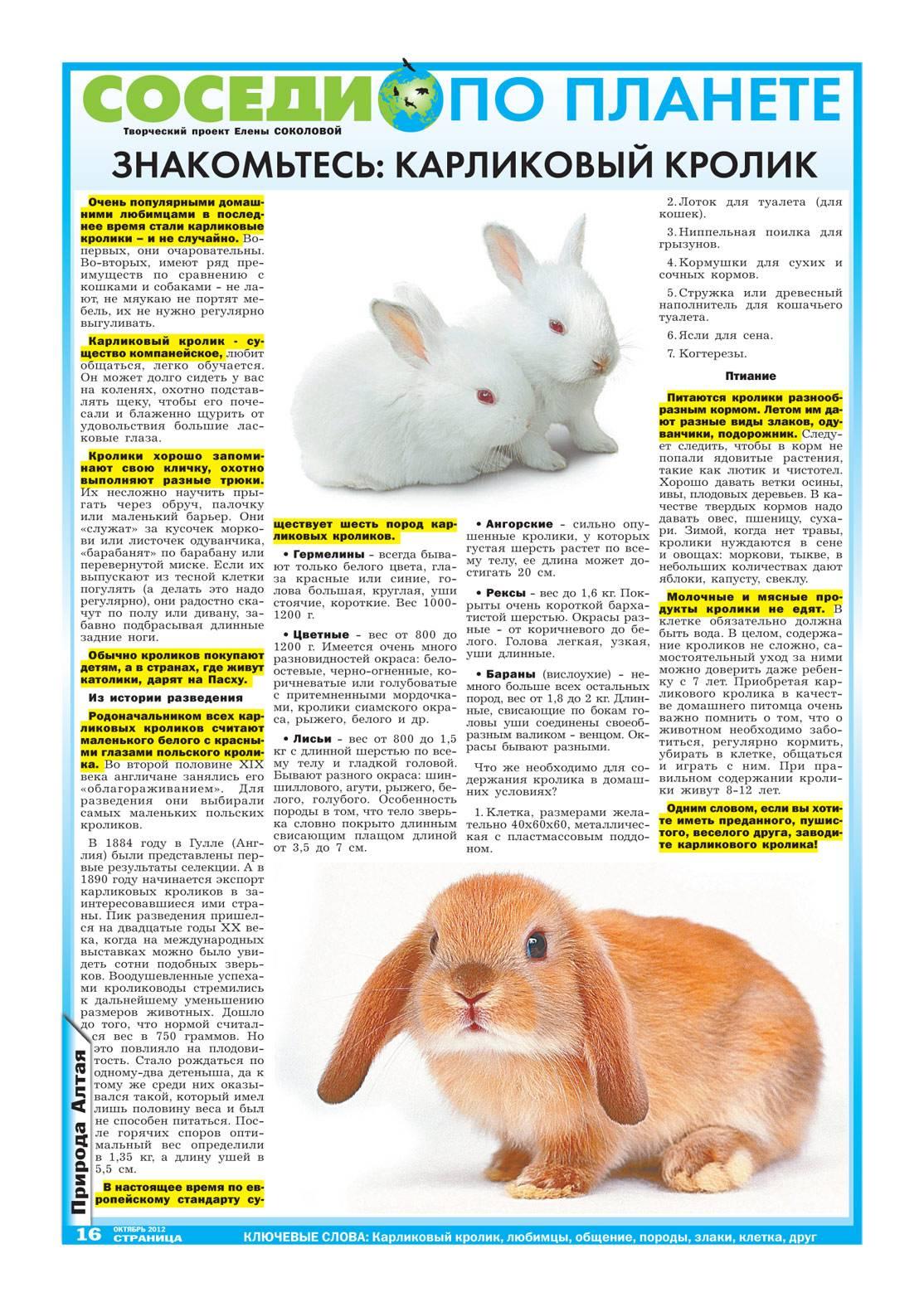 Декоративные кролики: сколько лет в домашних условиях живут карликовые кролики и как продлить их долголетие