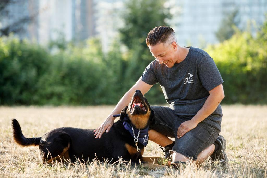 Общий курс дрессировки собак: что такое курс окд для собак, как научить собаку командам