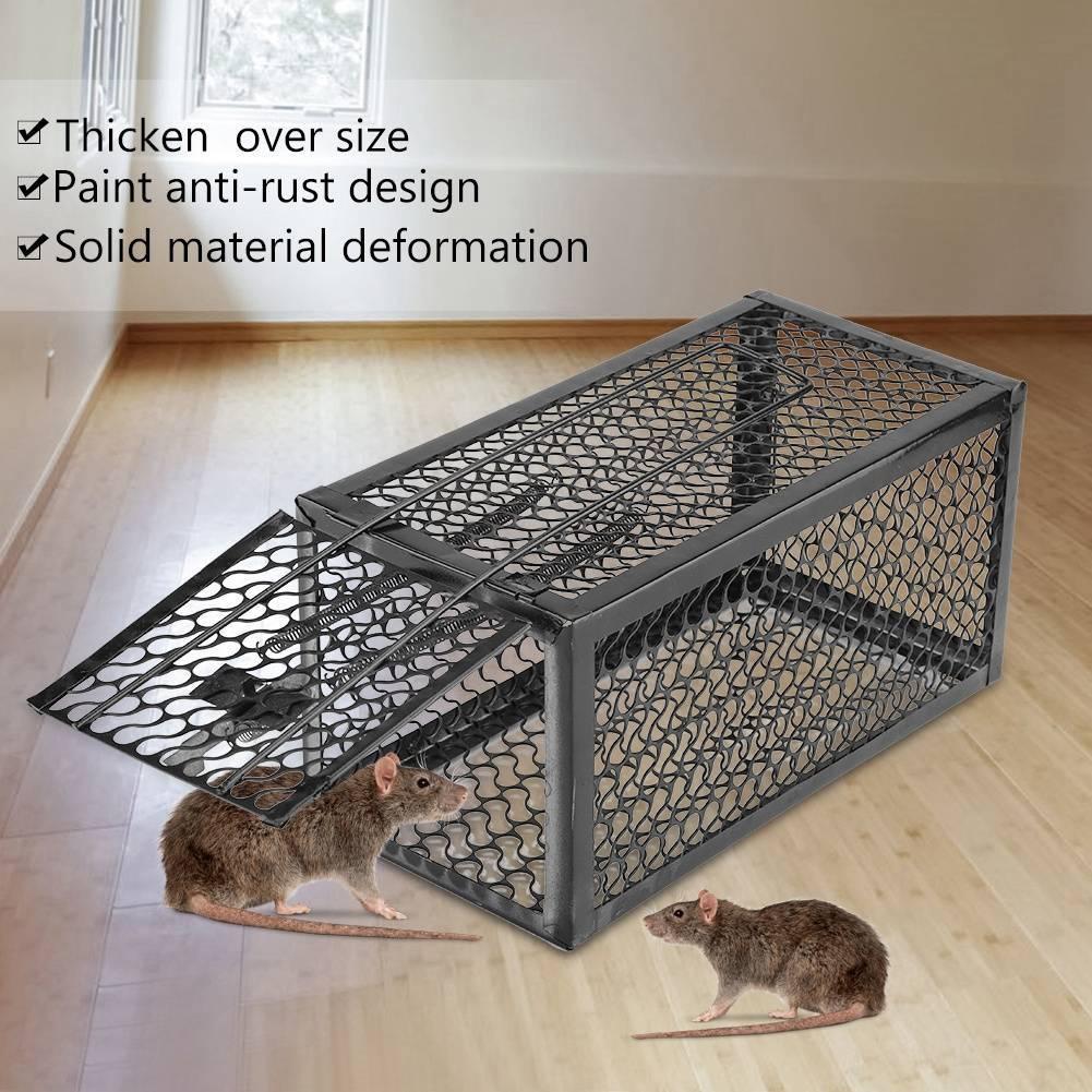 Чем травить крыс и мышей в домашних условиях и что лучше использовать для обработки