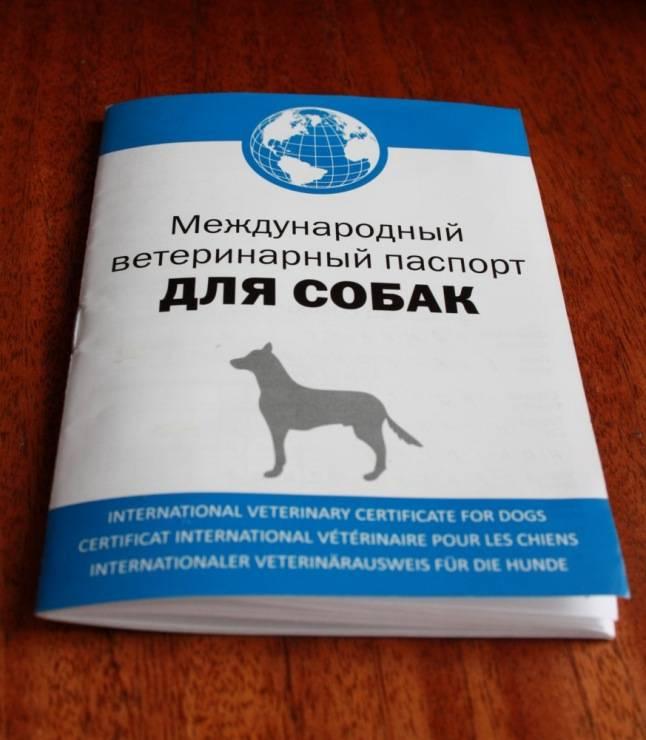Ветеринарный паспорт для кошки: как сделать, сколько стоит, международный, как заполнить