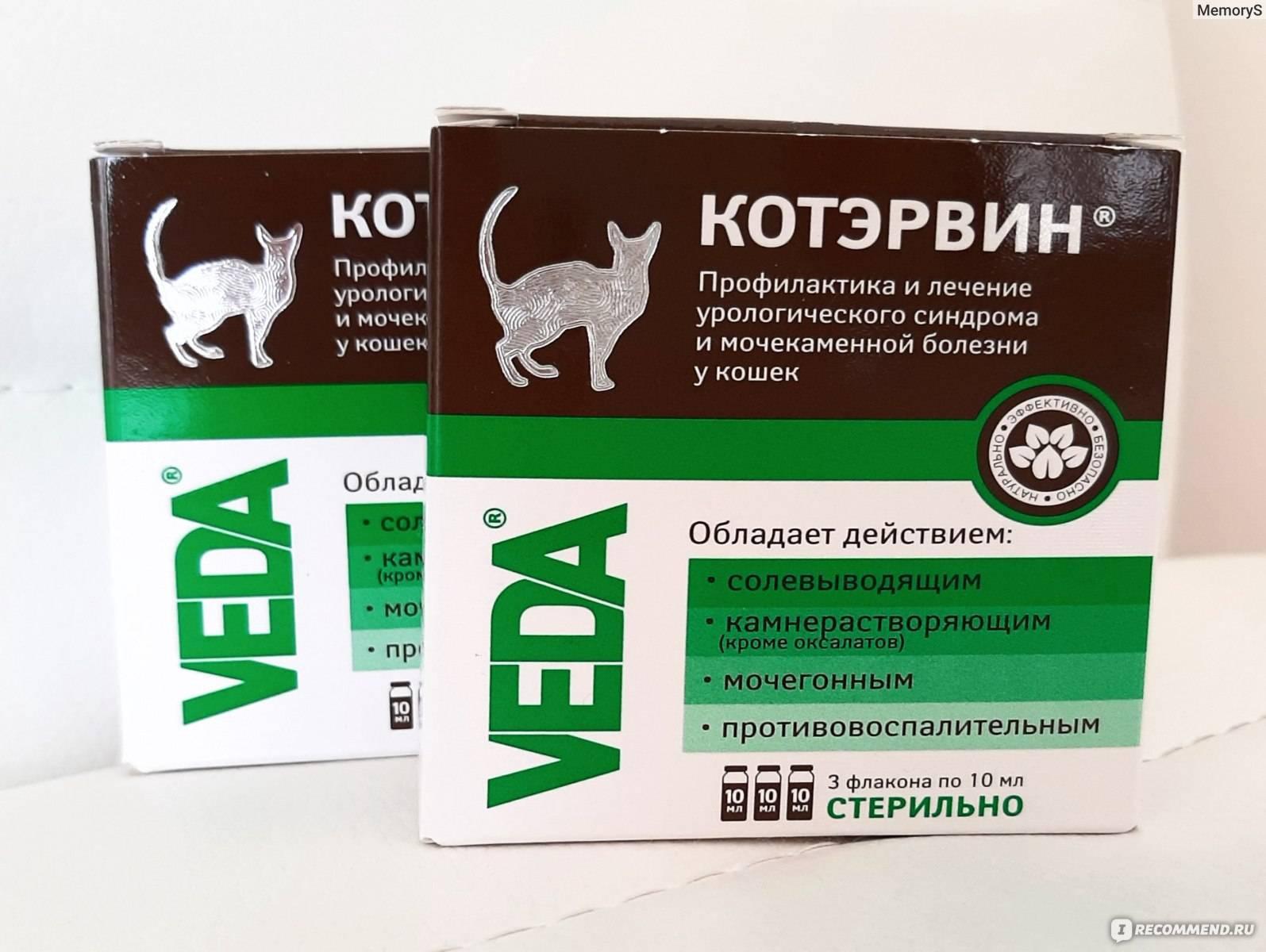 Чем кормить кота при мочекаменной болезни: правильность подбора пищи