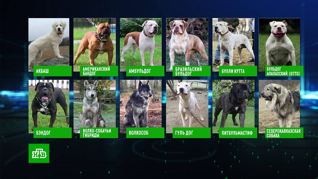 Список опасных пород собак в россии в 2019 — полный перечень мвд