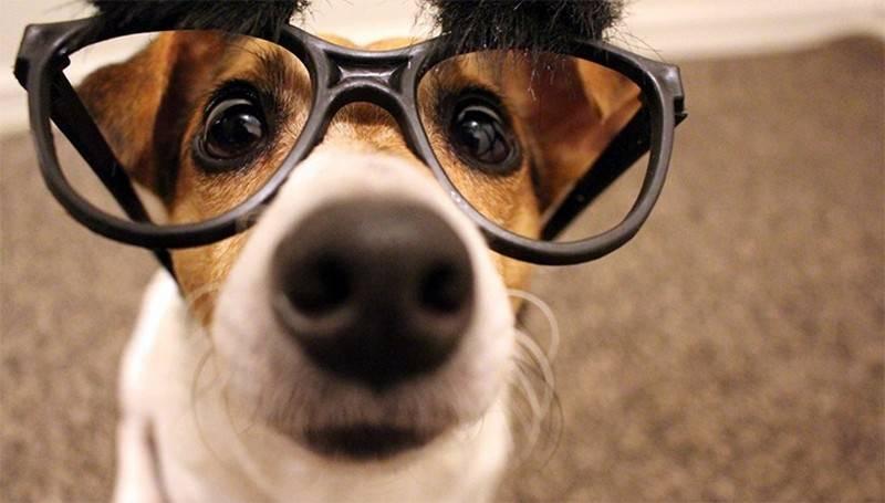Каким видят мир собаки и различают ли цвета