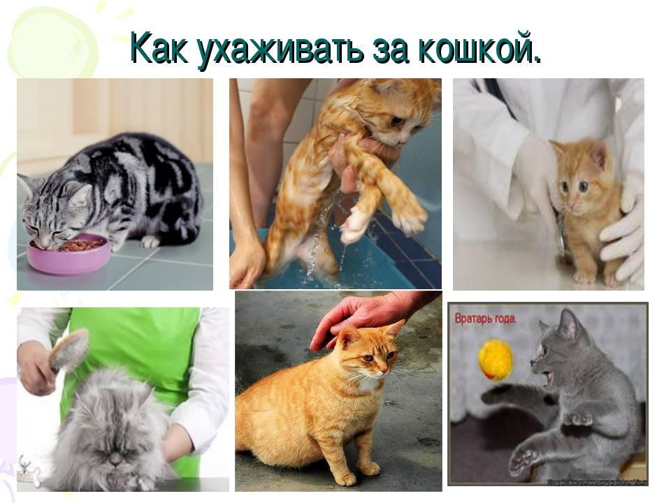 Основные причины почему линяют кошки: примеры что нужно и не надо делать
