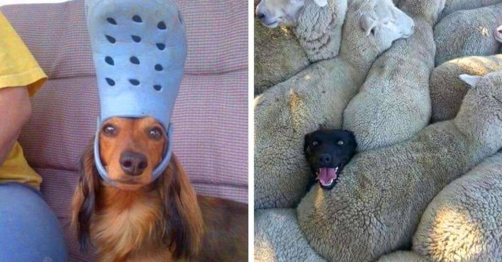 Анекдоты про собак — самые смешные до слез (свежие)