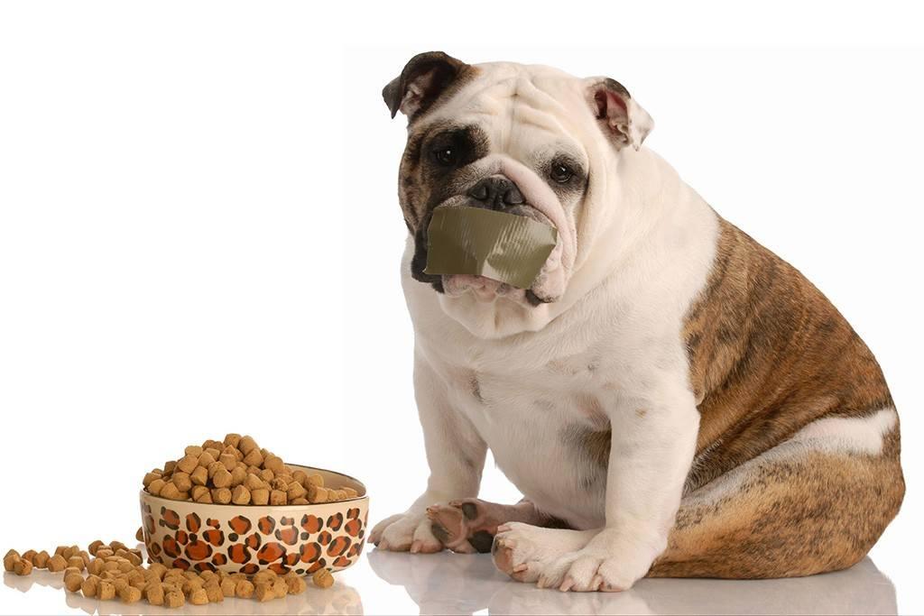 """Энтероколит у собак - симптомы и лечение воспалений кишечника у собак. ветеринарная клиника """"зоостатус"""""""