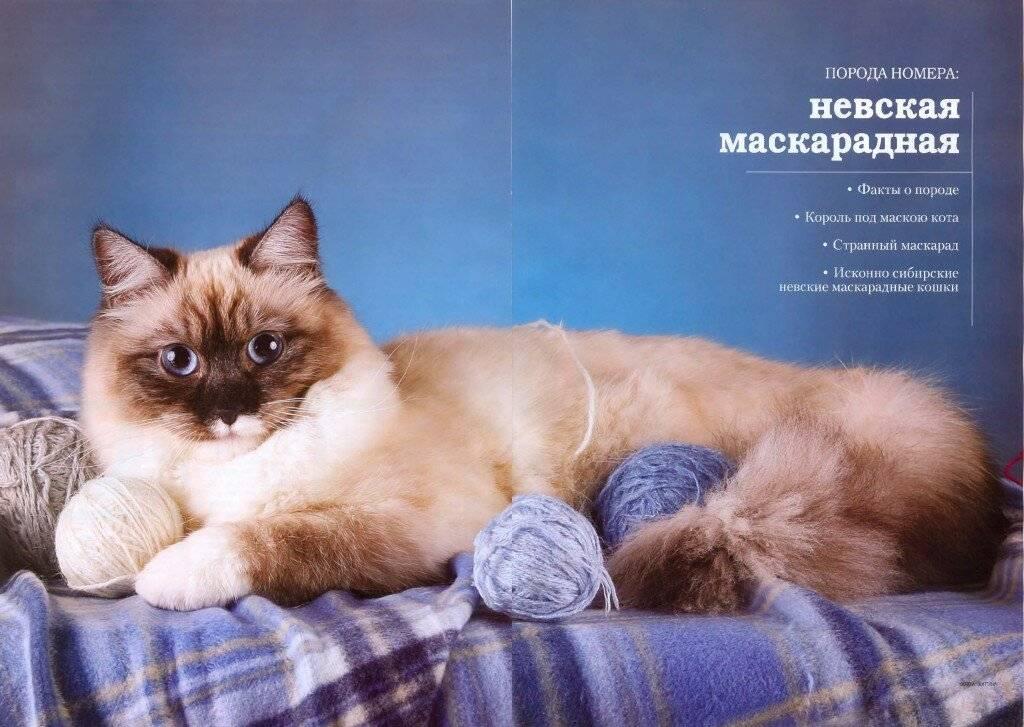 Невская маскарадная