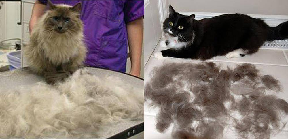 Почему кот линяет круглый год как лечить