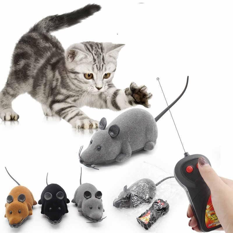 Самые умные породы кошек: какие представители семейства кошачьих входят в топ-10?