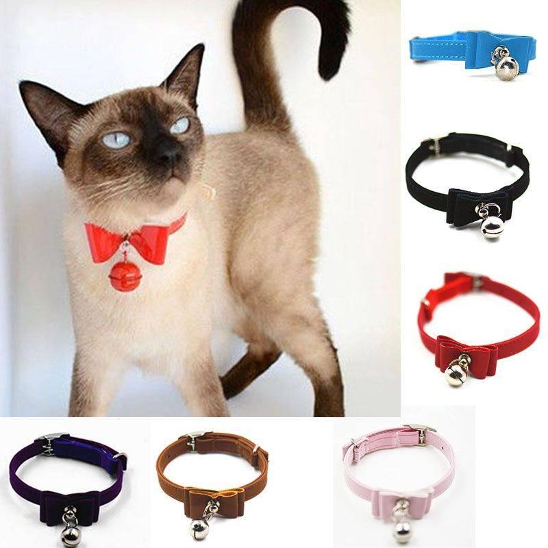 Успокаивающие ошейники для кошек с феромонами: виды и правила использования