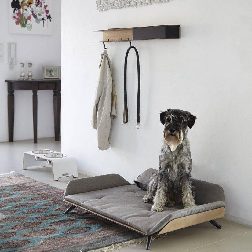 Как отучить собаку писать на кровать