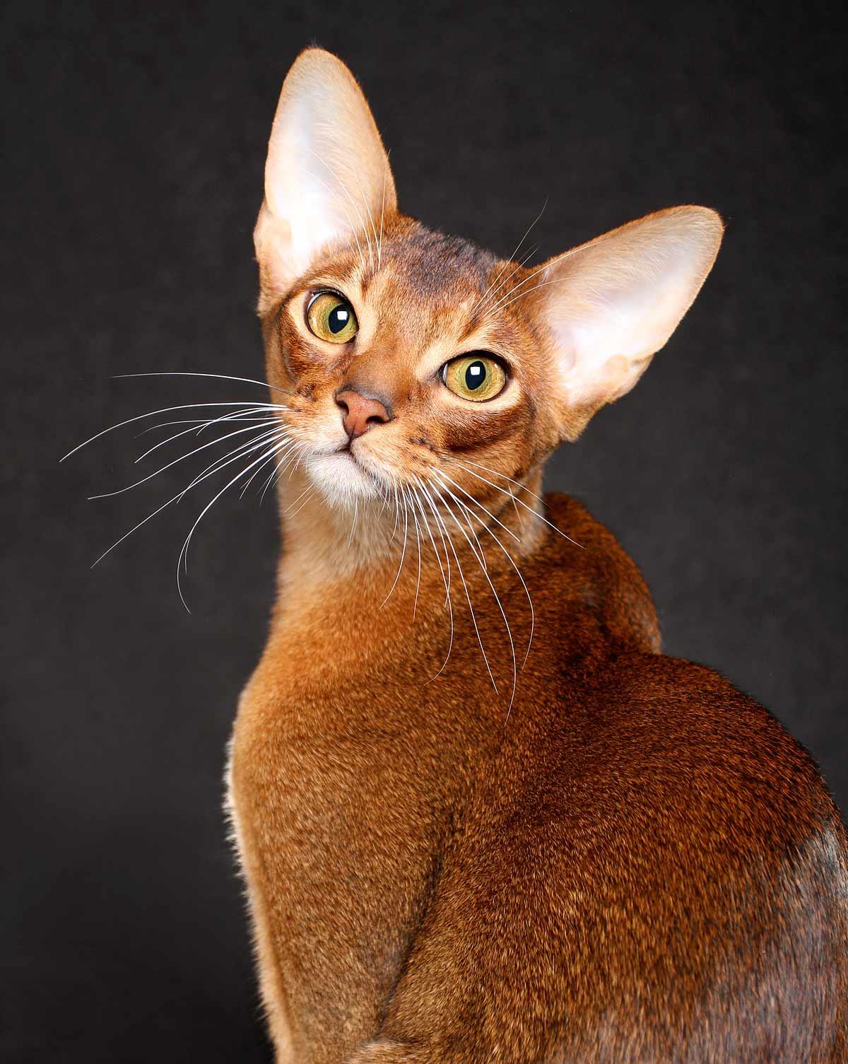 Мой нежный и ласковый кот: 15 пород - 15 характеров - все о породах кошек с описанием, фотографиями и названиями.все о породах кошек с описанием, фотографиями и названиями.