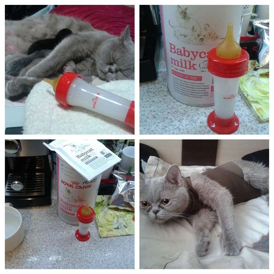Как помочь кошке при запоре?