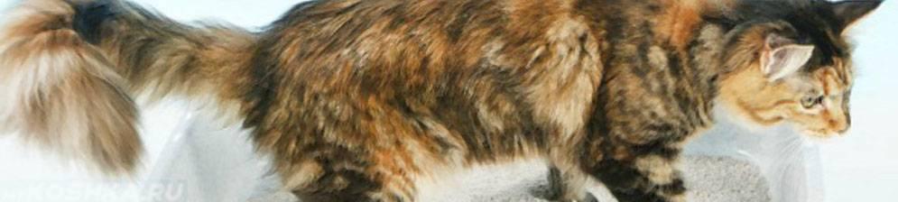 Диарея у кошек: почему возникает и какую помощь оказать