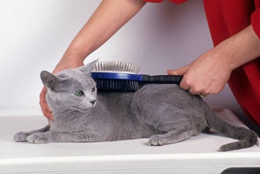 Как сделать стрижку кошке (груминг)