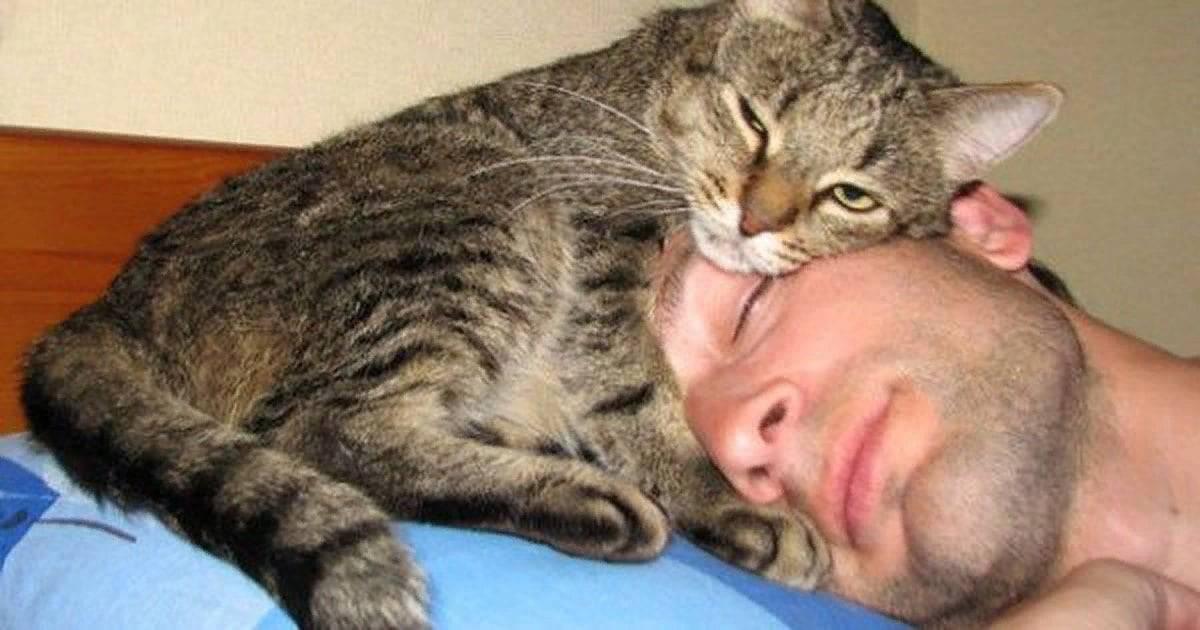 Хозяин для кошки – тот, с кем она безраздельно счастлива: как коты его выбирают
