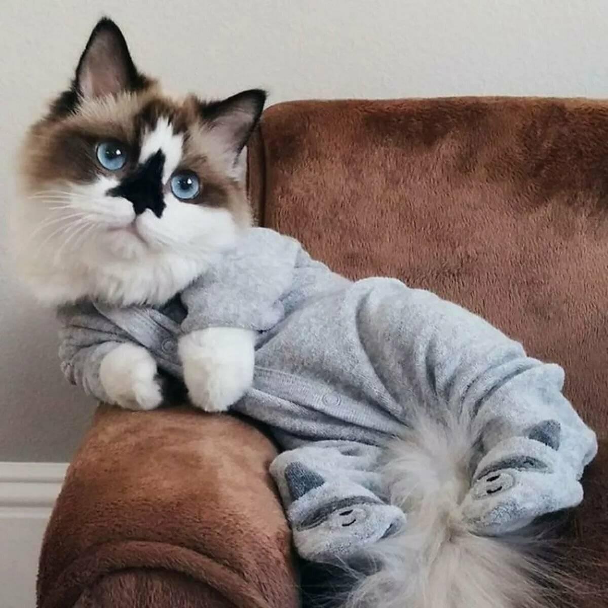 Какие породы кошек самые распространённые в россии. топ-10 самых популярных пород кошек с описанием и фото | inwomen