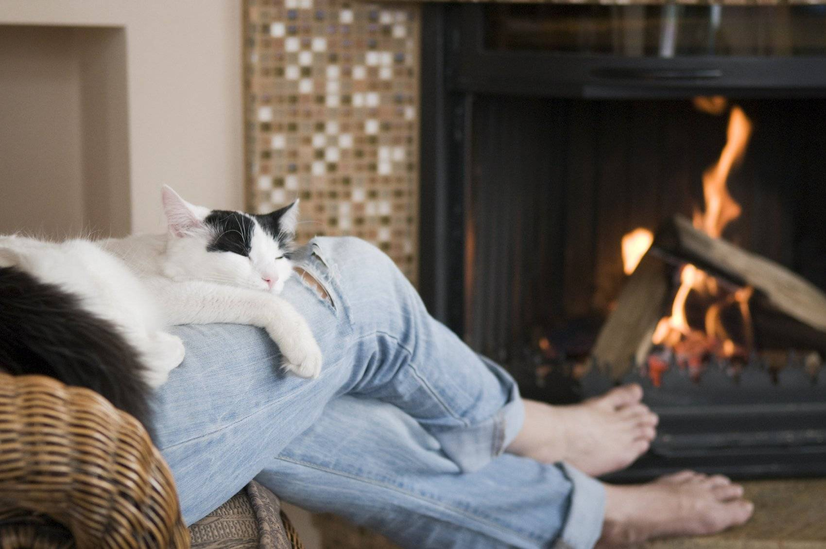 Что нужно кошке для комфортной жизни в маленькой квартире