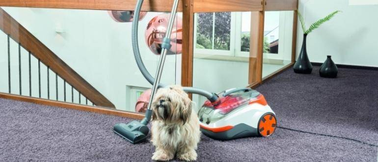 Что закапать в глаз собаке? применение альбуцида у собак