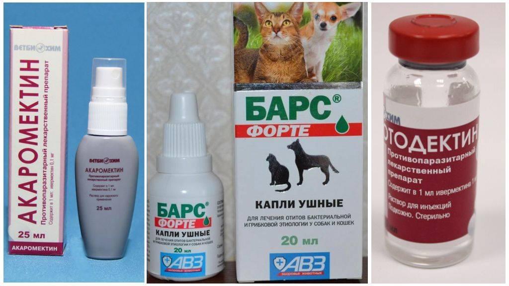 Способы самостоятельного лечения ушных клещей у кошки дома без ветеринара