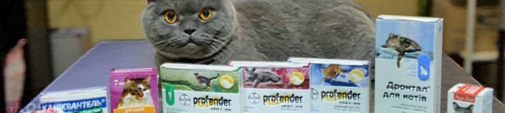 Почему старой кошке или коту нужна особая защита от гельминтов