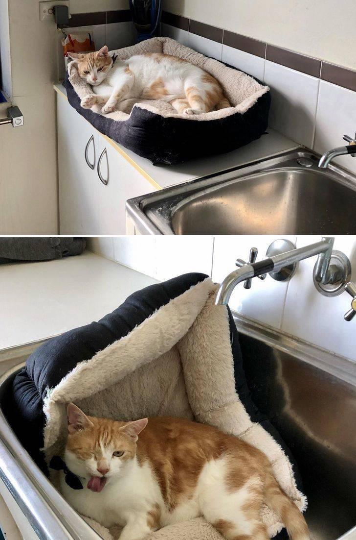 Самые необычные породы кошек и котов
