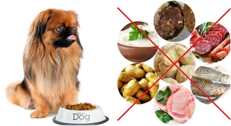 «кости собакам нельзя, как кошкам – молоко». ветеринары рассказывают, как кормить питомцев