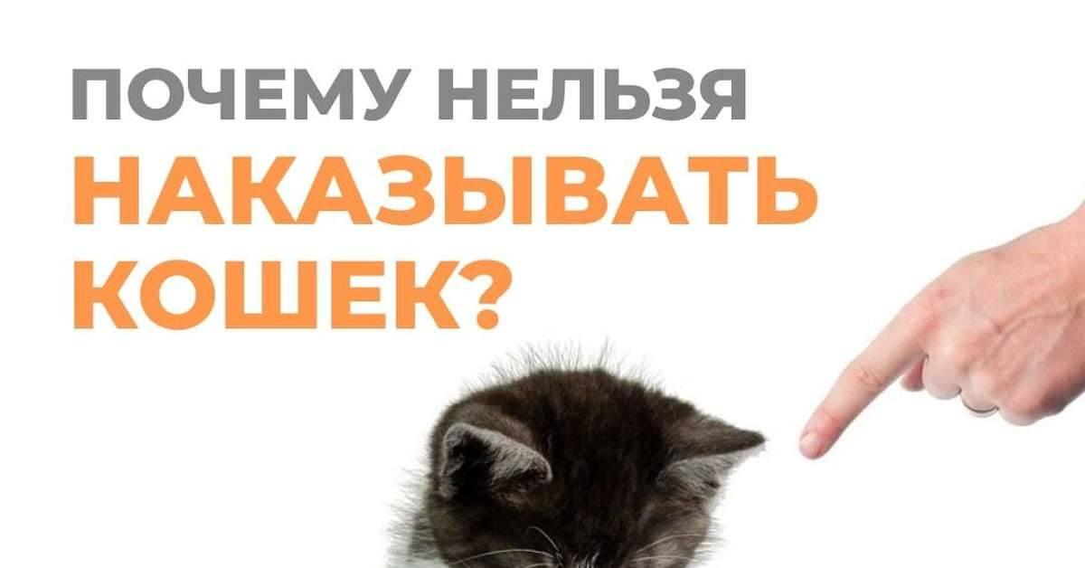 Можно ли наказывать кошку, кота или котёнка: доводы против