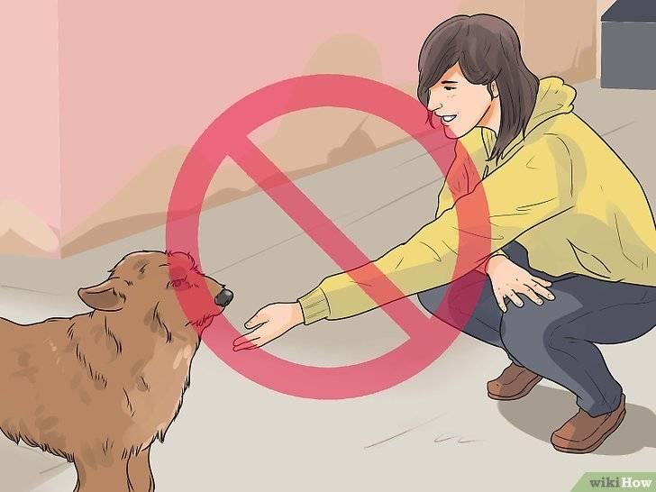 Что нельзя делать хозяину кошки, чтобы не навредить ей