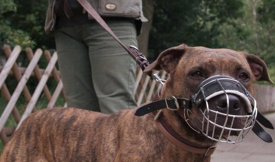 Правила и закон о выгуле собак 2020: намордники, поводки и их отсутствие, где можно гулять и ответственность за нарушение