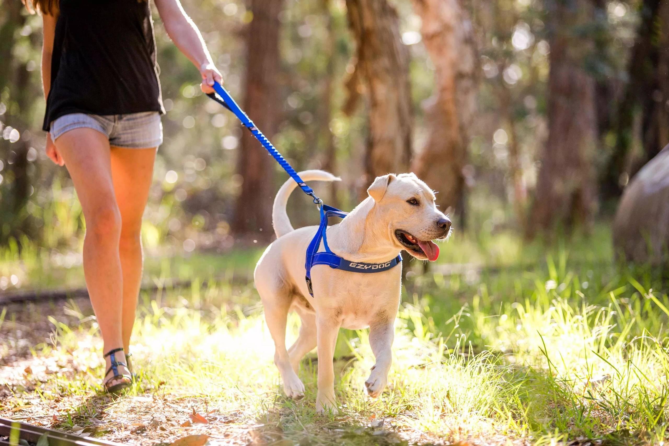 Собака сильно тянет поводок, видео как отучить щенка тянуть поводок на прогулке