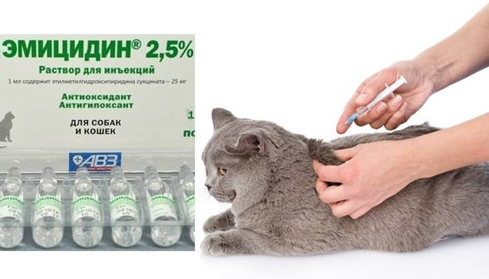 Эмицидин для кошек: лекарство от старости