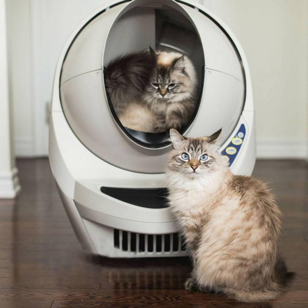 Автоматический туалет для кошек: выбор кошачьего самоочищающегося биотуалета. особенности лотков-роботов для котов. отзывы владельцев