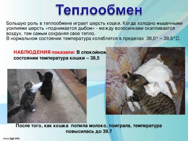 Как понять что у кошки температура: примеры без градусника