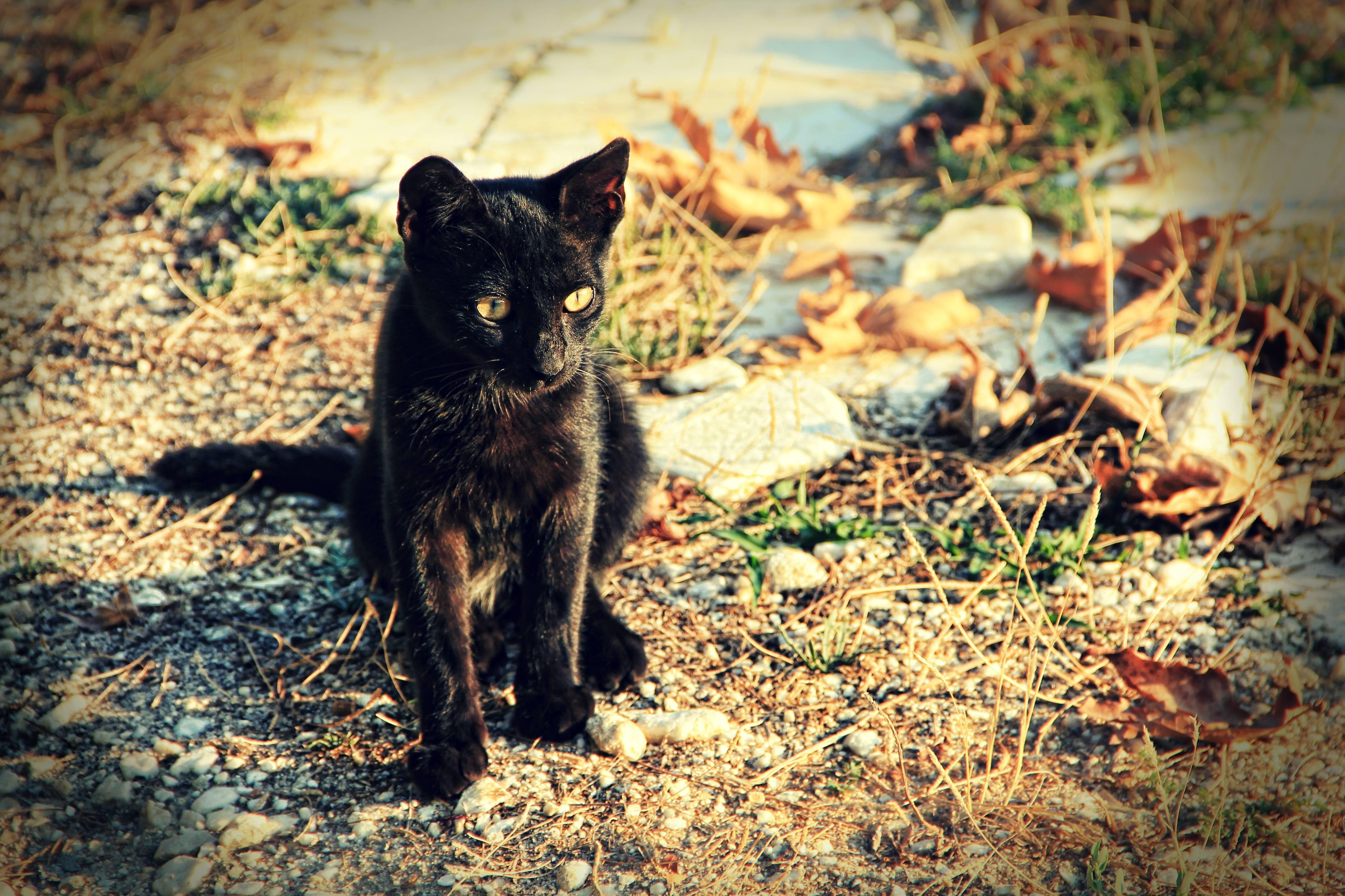 Кошка пришла в дом: примета и возможные толкования по месяцу и цвету