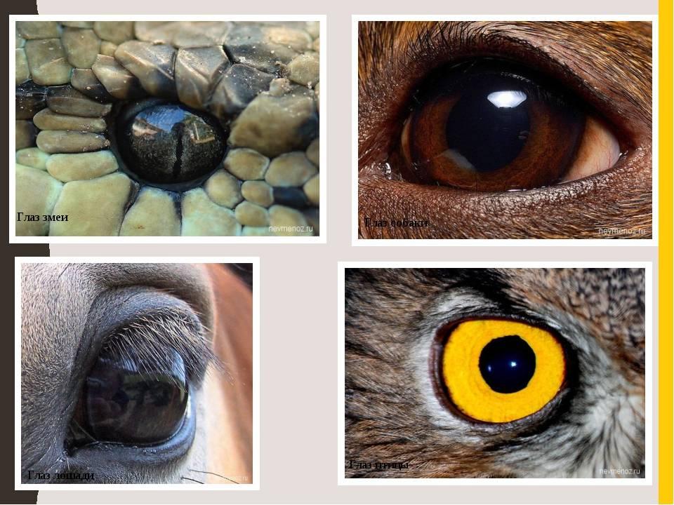 Зрение собак: как видят собаки