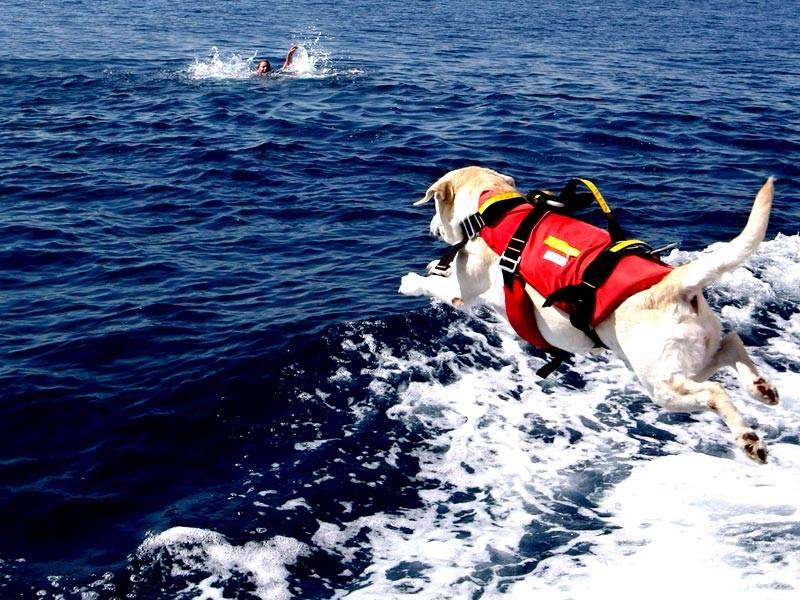 О лавинной подготовке собак.