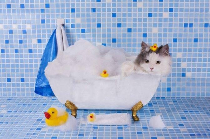 ᐉ сколько раз в месяц можно мыть кошку? - zoomanji.ru