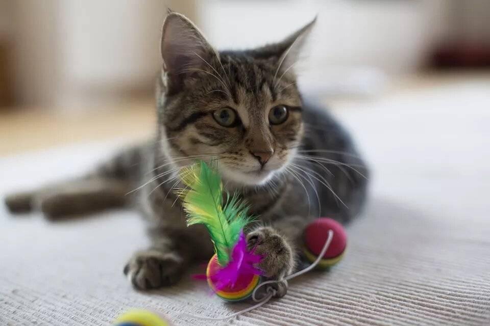 Развивающие игры для домашних кошек
