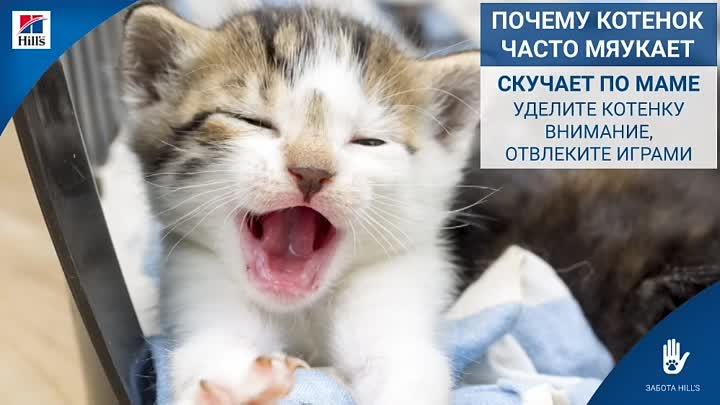"""Почему котенок мяукает, когда ходит в туалет?   блог ветклиники """"беланта"""""""