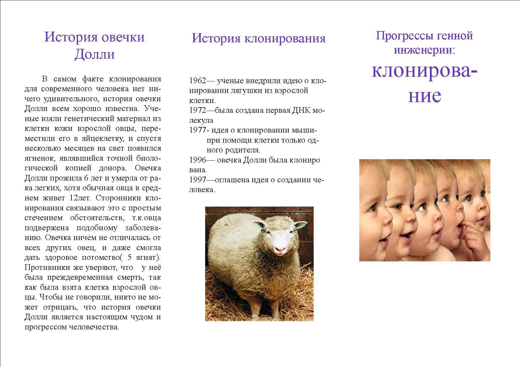 Клонирование: особенности и виды клонированных животных. овечка долли