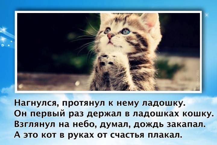 Почему кот плачет - причины и что делать - kotiko.ru