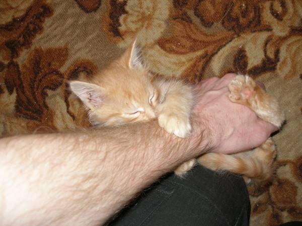 Как правильно отучить кота кусаться и царапаться: причины агрессии и что делать