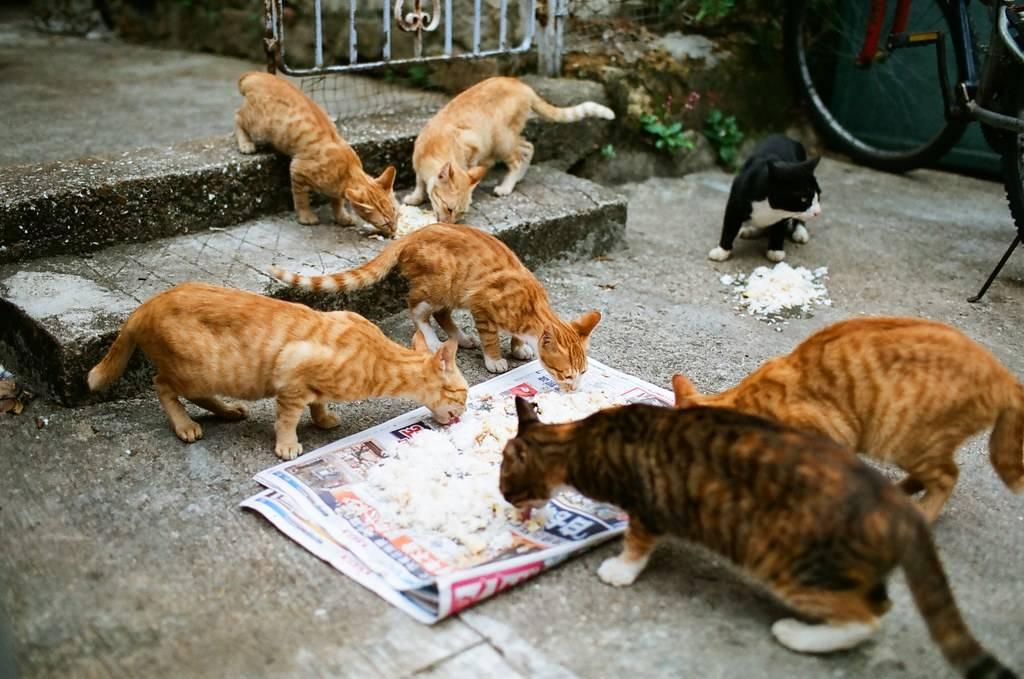 """Кошка в доме возьмет на себя вашу """"дурную"""" энергию и вашу болезнь.."""