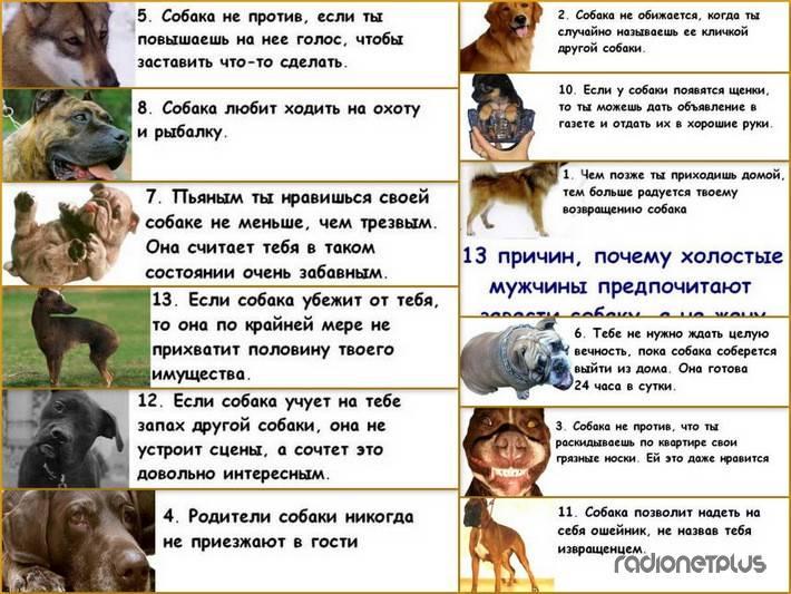 Учимся понимать язык собак.
