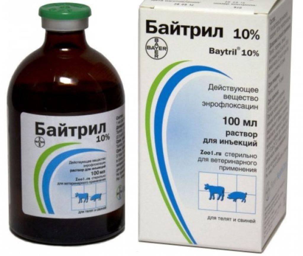 Байтрил 2 - купить, цена и аналоги, инструкция по применению, отзывы в интернет ветаптеке добропесик