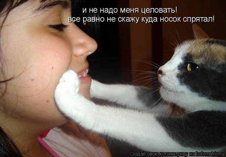 Можно ли целовать кошек? научное и народное объяснение в пользу отказа от такой привычки