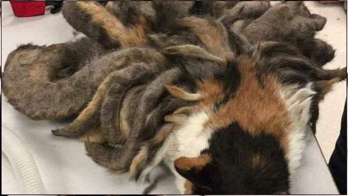 Из-за чего бывает рвота у кошки: причины, симптомы, лечение, первая помощь и профилактика