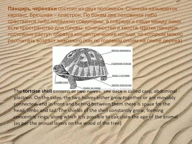 Травмы панциря - все о черепахах и для черепах